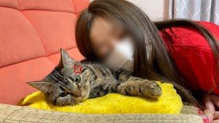 飼い主に顔を埋められてあからさまに不機嫌な態度を取ってしまった猫w