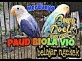 Lovebird Paud Balibu Biola Vio Belajar Ngekek Rapet Cocok Untuk Masteran  Mp3 - Mp4 Download