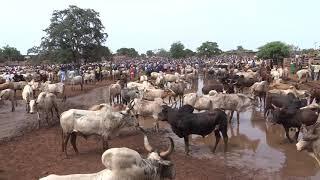 marché au bétail Fada N'Gourma