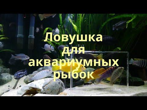 Ловушка для аквариумных рыбок Hobby Genius. Малавийские цихлиды 540л.
