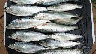 Kokanee Fishing Alder Lake 20140615