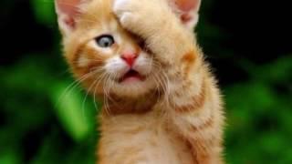 Смешные котики (картинки)