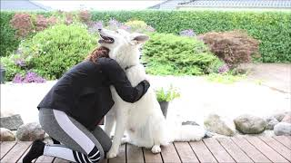 Hugging my dog for too long.. | White Swiss Shepherd | 13 months old