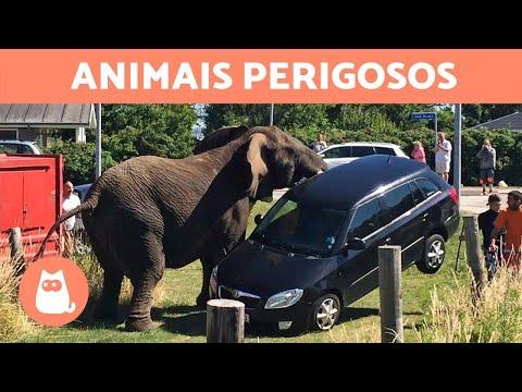 os-10-animais-mais-perigosos-do-mundo