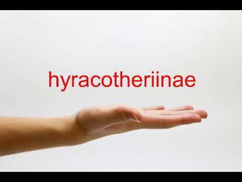 How to Pronounce hyracotheriinae - American English
