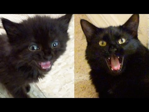 MEOW MIX! Kittens & Cats Meowing Compilation