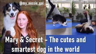 Mary & Secret the cutest and smartest dog in the world  El Perro más tierno e Inteligente del Mundo