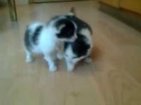 süßen Miezekatzen