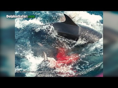Whale Gives Birth Next to Whale Watching Boat Off Dana Point