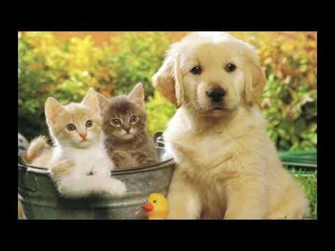 """Окружающий мир 1 класс ч.2, тема урока """"Почему мы любим кошек и собак?"""", с.42-45, Школа России."""
