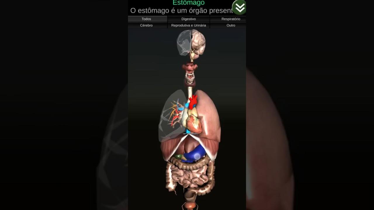 Anatomia dos órgãos humanos em 3D