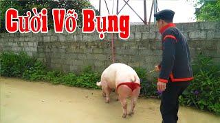 Đi Đánh Giống Lợn Gặp Cô Chủ Xinh Xắn - Phim Hài Tết 2021 A Hy Mới Hay Nhất Cười Vỡ Mồm