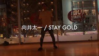 向井太一 - STAY GOLD