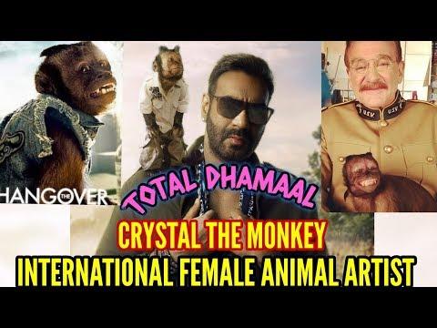 AJAY DEVGNS TOTAL DHAMAAL | INTERNATIONAL FEMALE ARTIST CRYSTAL MONKEY | FIRST LOOK | WHO IS CRYSTAL Mp3
