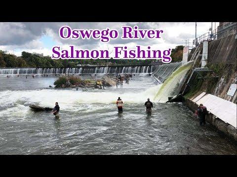 Oswego River Salmon Fishing NY 2018 - Part 2   Fishingct   Amusing Fishing Video