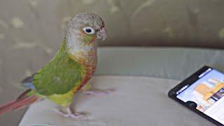 방탄 작은 것들을 위한 시 앵무새 반응은?