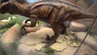 Смотреть видео Дарвиновский музей онлайн