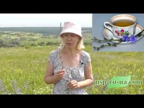Польза цикория, рецепт чая (напитка) с цикорием, полезные свойства