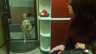 Бим лает шепотом (The dog barking in a whisper)