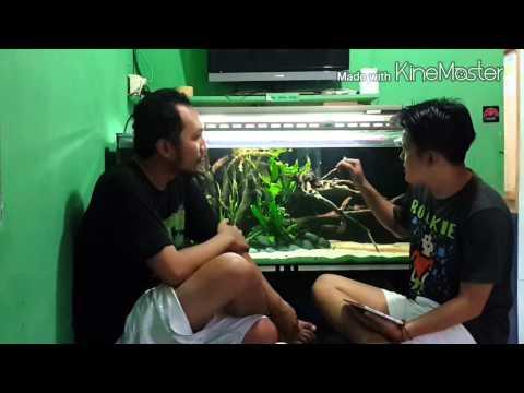 BERBINCANG AMIS - Aquarium Setting (Ivo Tandhi)