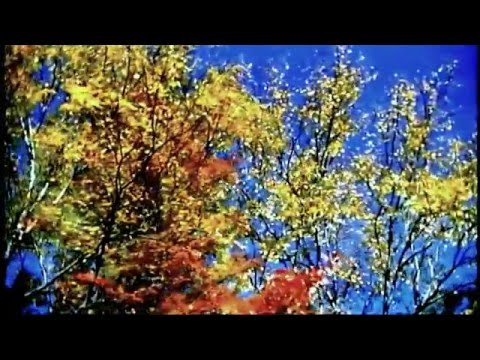 The Everly Brothers  Autumn Leaves