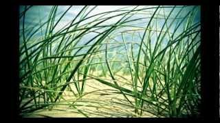 Northern Lite - We are (Tabuka remix)