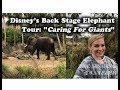 "Elephants Backstage: Disney's ""Caring for Giants"" Tour"