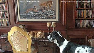 Great Dane Is Learning To Respect Cat's Space