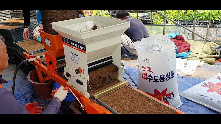 벼모판에 물 주면서 볍씨 파종하고 상토로 덮는 과정을 한번에 합니다.(2번과정)