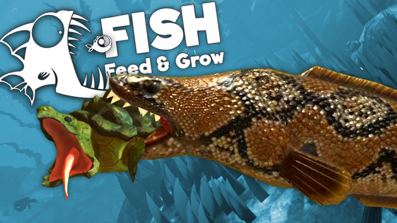 fish eat and grow