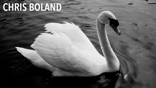 Photographing Swans With Fomapan 100 film and Canon AF35ML