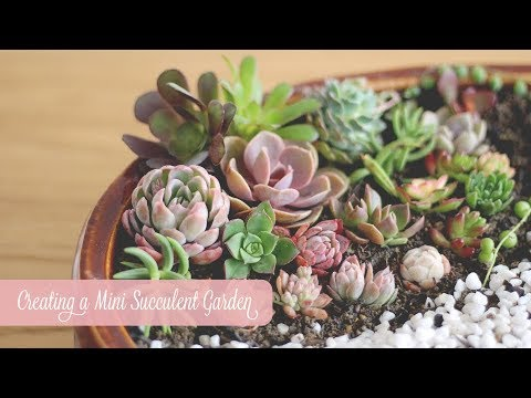 My First Mini Succulent Garden