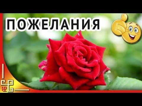 Прекрасной женщине прекрасные цветы 🌹Желаю вам ЦВЕСТИ КАК эти РОЗЫ 🌹 Музыкальная открытка