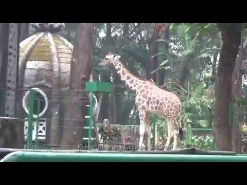 Ragunan Zoo | Kebun Binatang Ragunan Jakarta