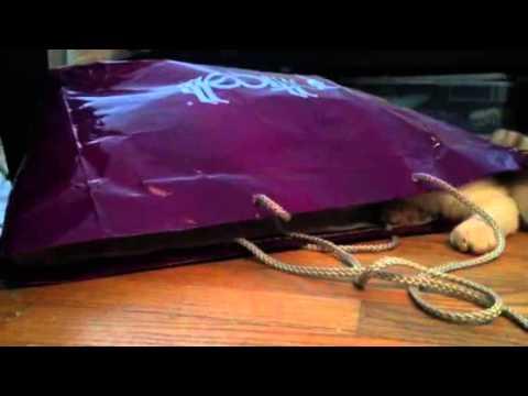 Dallas Kitteh hides in a bag