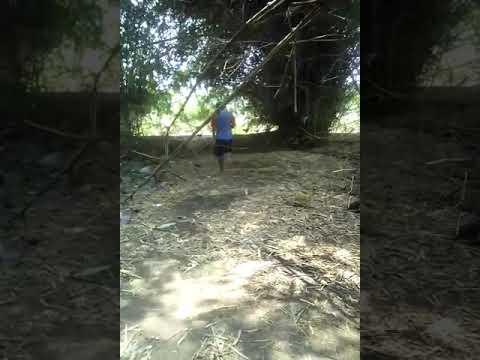 Pemotongan bambu patil lele,tumpang sari