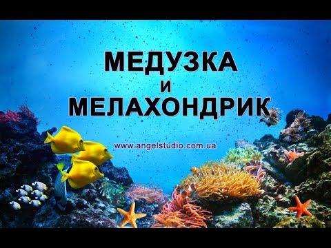 Медузка и мелахондрик. Рассказ о дружбе и о море.
