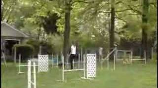 Kitty The Cattle Dog Agility 15 Months