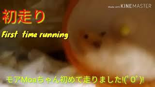 First running   初めて走りました! モアMoa thumbnail