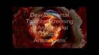 Malaria - The risks, effects and treatment.wmv