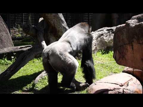 Audubon Zoo and Aquarium in New Orleans