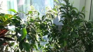 Зимний сад.mpg(домашняя оранжерея., 2012-02-06T09:19:07.000Z)
