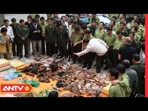 Thâm nhập vào thị trường buôn bán chế phẩm từ động vật hoang dã   An toàn sống   ANTV