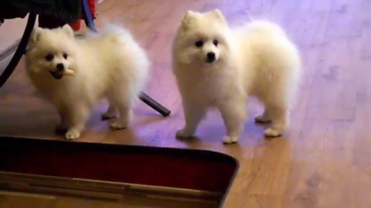 Как уговорить родителей купить собаку - YouTube