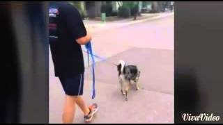Tucson Dog Training - Off Leash K9 Training