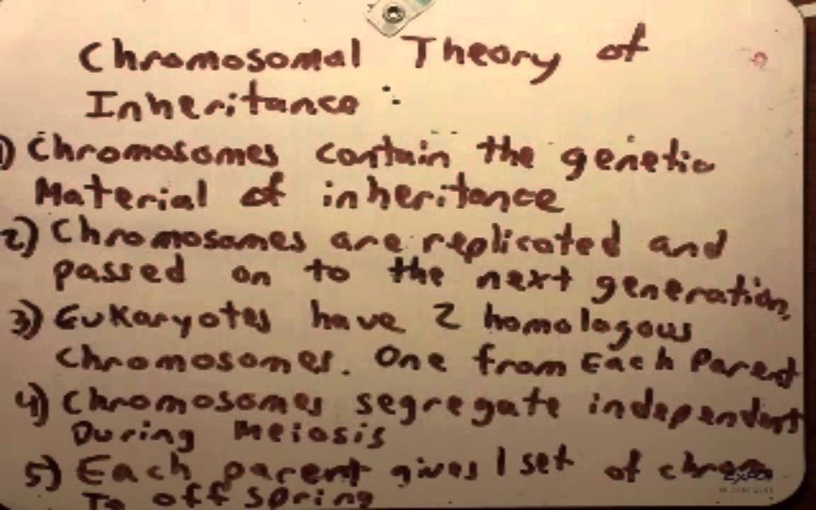 theory of inheritance vs theory of (biology) a theory of how characteristics of one generation are derived from earlier generations.
