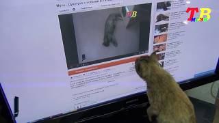 Муха Цукатуха смотрит Youtube