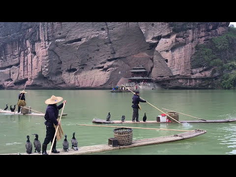China Fishing With Cormorant Birds Jiangxi