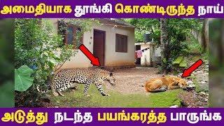 அமைதியாக தூங்கி கொண்டிருந்த நாய் அடுத்து நடந்த பயங்கரத்த பாருங்க | Tamil News | Tamil Seithigal