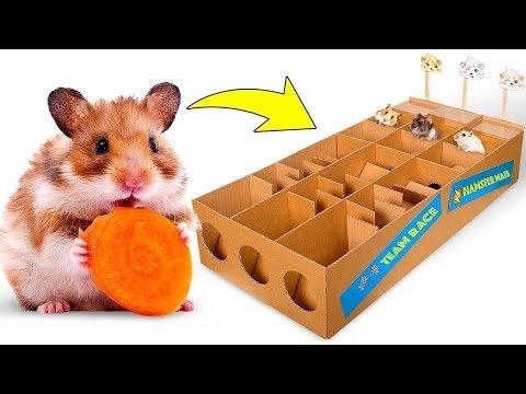 Nueva pista de carrera para las hamsters. ¿Quién ganará?